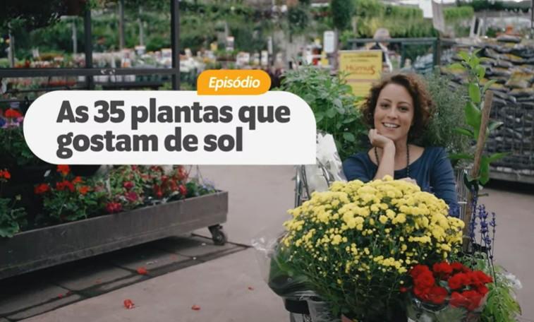 Shopping Garden 35 Plantas Que Amam Sol Boas Para Calor E