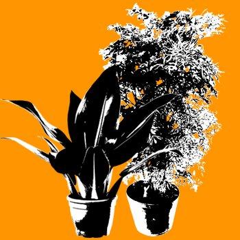 Plantas de Sombra e Meia Sombra