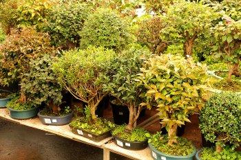Bonsai diversas espécies